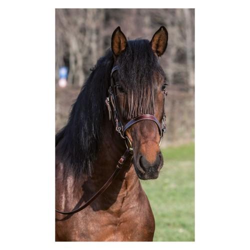 b6e2cf1db5654 Loesdau Ogłowie hiszpańskie - Sklep jeździecki Equiversum